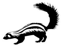 Skunk. Illustration skunk, raised his big bushy tail Stock Photography