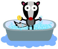 Skunk's bath time Royalty Free Stock Image