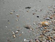 Skupia się na resztkach morski życie, piasek i morze, błękitny morze i Obraz Royalty Free