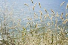 Skupia się suchej trawy, zamazany morze na tle, kopii przestrzeń Natura, lato, trawy poj?cie zdjęcia royalty free