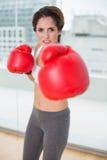Skupiający się brunetka boks i patrzeć kamerę Obrazy Royalty Free