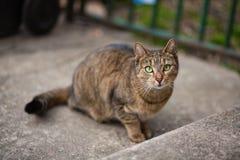 Skupiający się kot Fotografia Stock