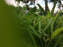 Skupiający się krzak zieleni liście obraz royalty free