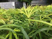 Skupiający się krzak zieleni liście obraz stock