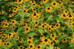 skupisko żółty fotografia royalty free