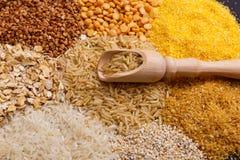 Skupk ha farcito con le bugie del riso su un giacimento detritico dei cereali Fotografie Stock Libere da Diritti
