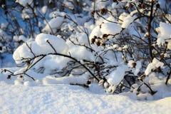 Skura under snön Arkivbild