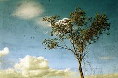 Skutek stara fotografia - drzewo Zdjęcia Stock