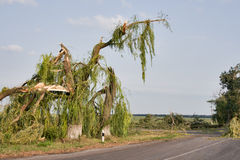skutka huragan Ukraine Zdjęcie Royalty Free