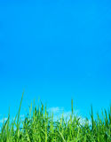Sky. Blue Sky and green grass Stock Photography