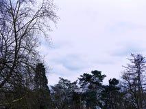 sky Arkivbild