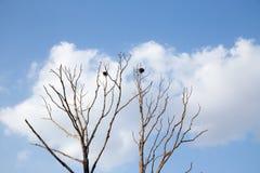 sky Royaltyfri Foto