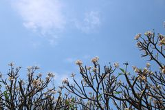 The sky above the flowers tree Royalty Free Stock Photo