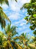 Sky above the jungle Royalty Free Stock Images