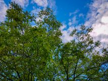 The sky above the tree in the forest stock image
