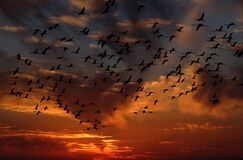 Sky, Afterglow, Flock, Bird Migration royalty free stock images