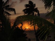 Sky, Arecales, Palm Tree, Sunset Royalty Free Stock Photography