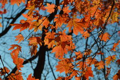 The sky of autumn. The warm sky in the autumn Royalty Free Stock Photos