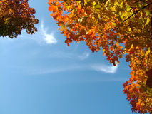 Sky in the Background. Blue sky framed by autumn leaves royalty free stock photos