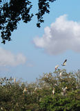Sky background with birds Royalty Free Stock Image