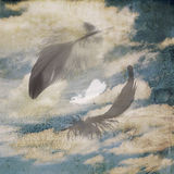 Sky background with feathers Royalty Free Stock Images