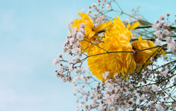 Sky Background and flowers. Small Flower Concept and Decoration royalty free stock images