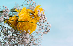 Sky Background and Yellow flowers. Small Flower Concept and Decoration Stock Images