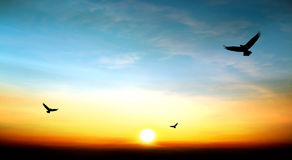 Sky beautiful sunset Stock Images