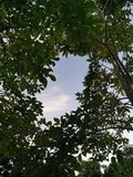 Sky behind the green leaves. stock photo