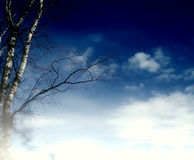 Sky and birch Royalty Free Stock Images