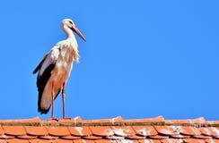 Sky, Bird, Beak, Stork stock image