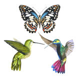 Sky bird colibri anf butterfly in a wildlife by watercolor style isolated. Stock Photos