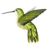 Sky bird colibri in a wildlife by watercolor style isolated. Wild freedom, bird with a flying wings. Aquarelle bird for background, texture, pattern, frame Stock Image
