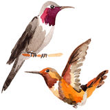 Sky bird colibri in a wildlife by watercolor style isolated. Royalty Free Stock Photos