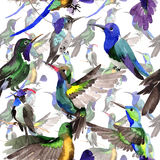 Sky bird colibri in a wildlife by watercolor style pattern. Sky bird colibri  pattern in a wildlife by watercolor style. Wild freedom, bird with a flying wings Royalty Free Stock Images