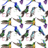 Sky bird colibri in a wildlife by watercolor style pattern. Stock Photos