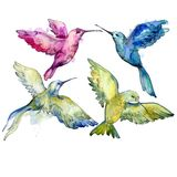 Sky bird colorful colibri in a wildlife by watercolor style isolated. Wild freedom, bird with a flying wings. Aquarelle bird for background, texture, pattern royalty free stock photo