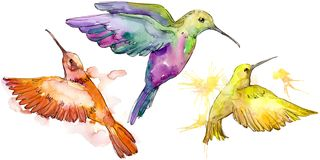 Sky bird colorful colibri in a wildlife by watercolor style isolated. Wild freedom, bird with a flying wings. Aquarelle bird for background, texture, pattern royalty free stock image