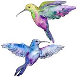 Sky bird colorful colibri in a wildlife by watercolor style isolated. Wild freedom, bird with a flying wings. Aquarelle bird for background, texture, pattern stock image