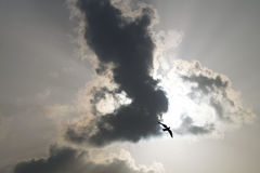 Sky and bird. Bird and sky at the correct time royalty free stock images