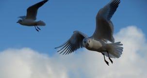 Sky, Bird, Fauna, Seabird royalty free stock image