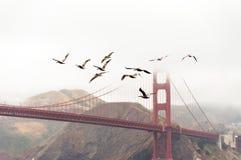 Sky, Bird, Fixed Link stock photo