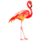 Sky bird flamingo in a wildlife by vector style isolated. Royalty Free Stock Images