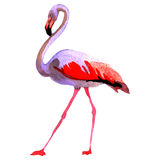 Sky bird flamingo in a wildlife by vector style isolated. Stock Photography