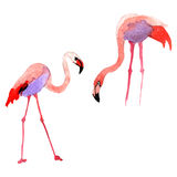 Sky bird flamingo in a wildlife by vector style isolated. Stock Images
