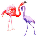 Sky bird flamingo in a wildlife by vector style . Stock Images