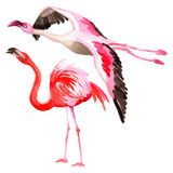 Sky bird flamingo in a wildlife by vector style . Stock Photo