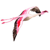 Sky bird flamingo in a wildlife by vector style . Stock Photos
