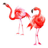 Sky bird flamingo in a wildlife by vector style . Royalty Free Stock Photography