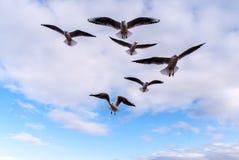 Sky, Bird, Flock, Bird Migration royalty free stock photo